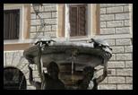 fontaine des tortues