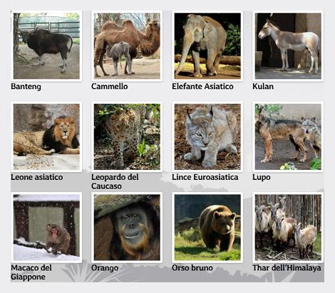 Bioparco, zoo di Roma