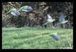Oiseaux, Parc de la Caffarella