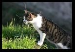 chats du largo argentina à rome