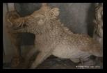 Salle des animaux du vatican