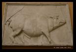porc romain