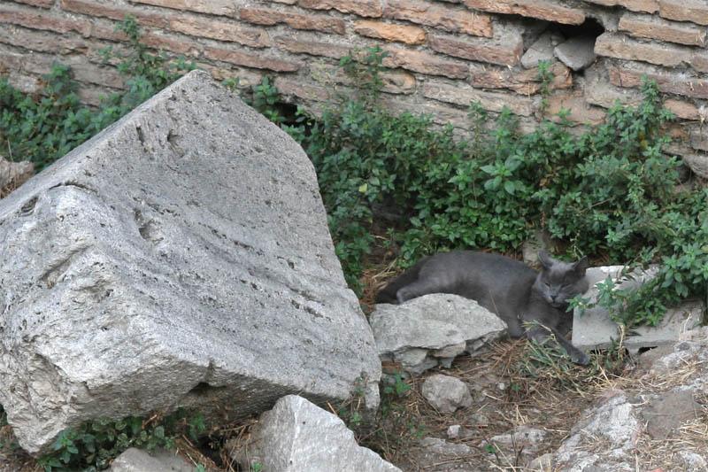 chat romain