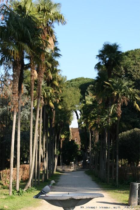 colline du caelius - celio