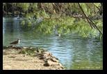 Giardino del lago - Parc de la Villa Borghese