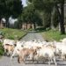 Parc archéologique de la Via Appia Antica